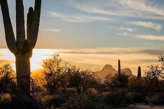 The setting sun casts a golden glow over Safford Peak in Saguaro National Park Tuscon Mountain District.
